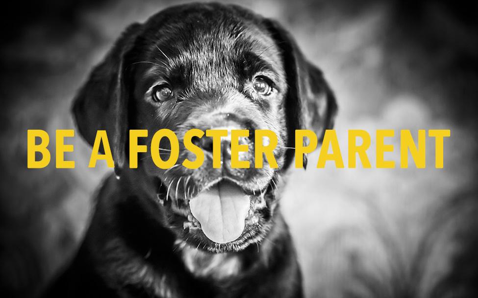 Farr Foster
