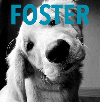 Foster A Dog